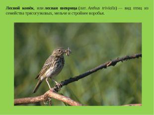 Лесной конёк, илилесная шеврица(лат.Anthus trivialis)— вид птиц из семейс