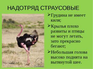 НАДОТРЯД СТРАУСОВЫЕ Грудина не имеет киля; Крылья плохо развиты и птицы не мо