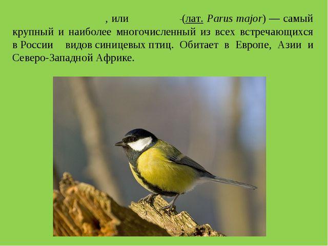 Больша́я сини́ца, илибольша́к (лат. Parus major)— самый крупный и наиболее...