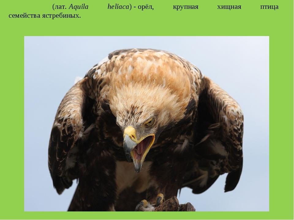 Моги́льник(лат.Aquila heliaca)-орёл, крупная хищная птица семействаястре...