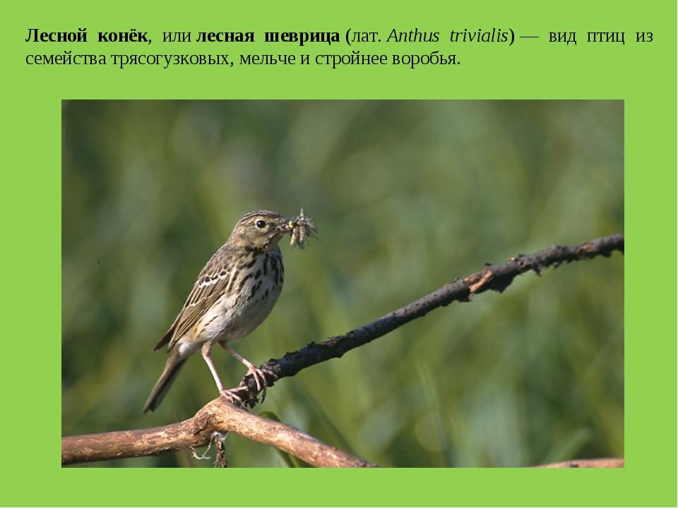 Лесной конёк, илилесная шеврица(лат.Anthus trivialis)— вид птиц из семейс...