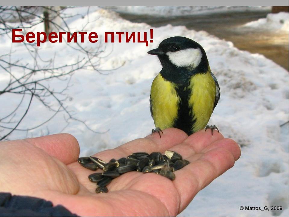 Берегите птиц! Берегите птиц!