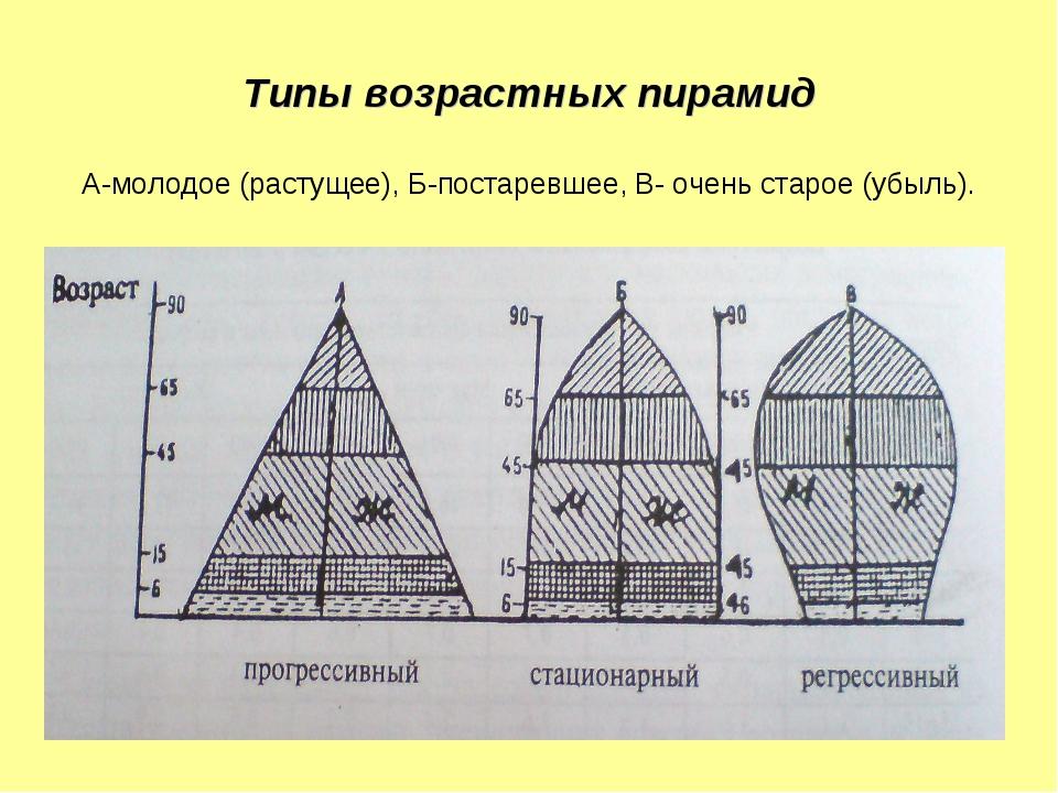 Типы возрастных пирамид А-молодое (растущее), Б-постаревшее, В- очень старое...