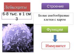 Лейкоциты Белые амебообразные клетки с ядром Иммунитет 6-8 тыс. в 1 см 3