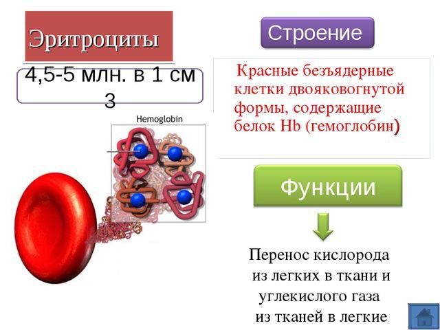 Эритроциты Красные безъядерные клетки двояковогнутой формы, содержащие белок...