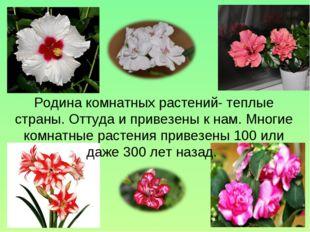 Родина комнатных растений- теплые страны. Оттуда и привезены к нам. Многие ко