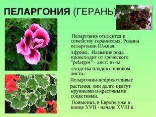 ПЕЛАРГОНИЯ (ГЕРАНЬ) Пеларгония относится к семейству гераниевых. Родина пелар
