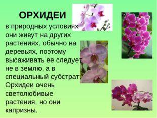 ОРХИДЕИ в природных условиях они живут на других растениях, обычно на деревья