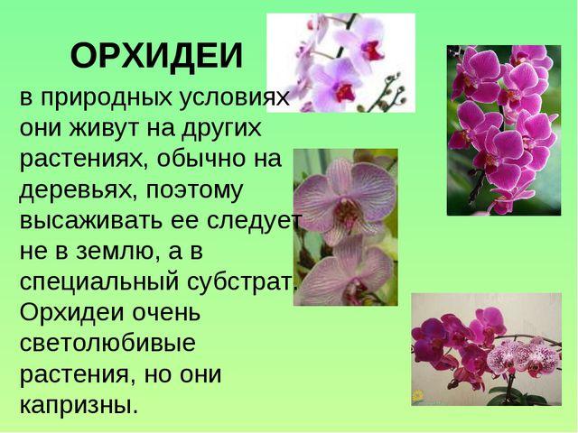 ОРХИДЕИ в природных условиях они живут на других растениях, обычно на деревья...