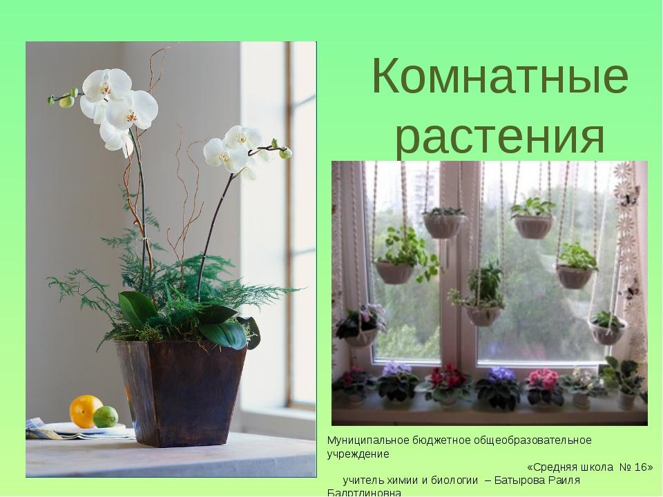 Комнатные растения Муниципальное бюджетное общеобразовательное учреждение «Ср...