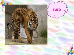 тигр Добрый Сильный Большой Серый