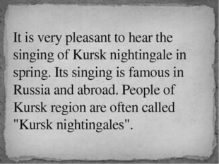It is very pleasant to hear the singing of Kursk nightingale in spring. Its