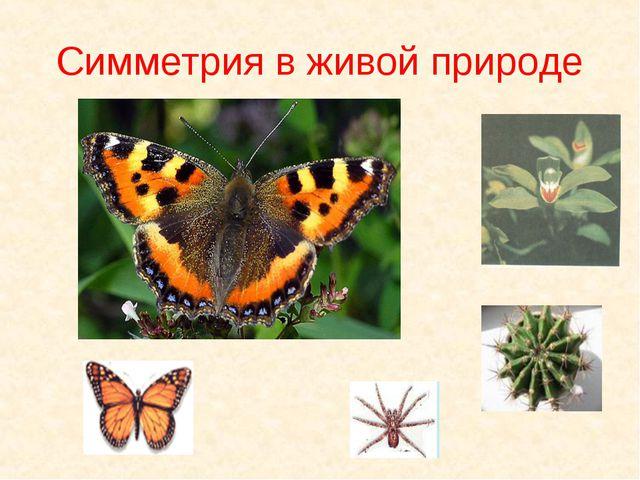 Симметрия в живой природе