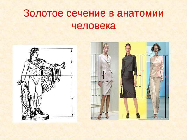 Золотое сечение в анатомии человека