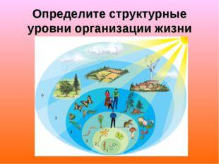 Определите структурные уровни организации жизни