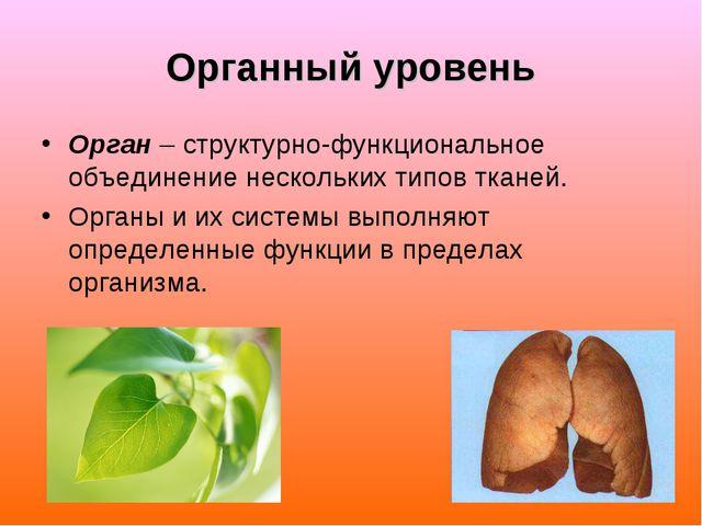 Органный уровень Орган – структурно-функциональное объединение нескольких тип...
