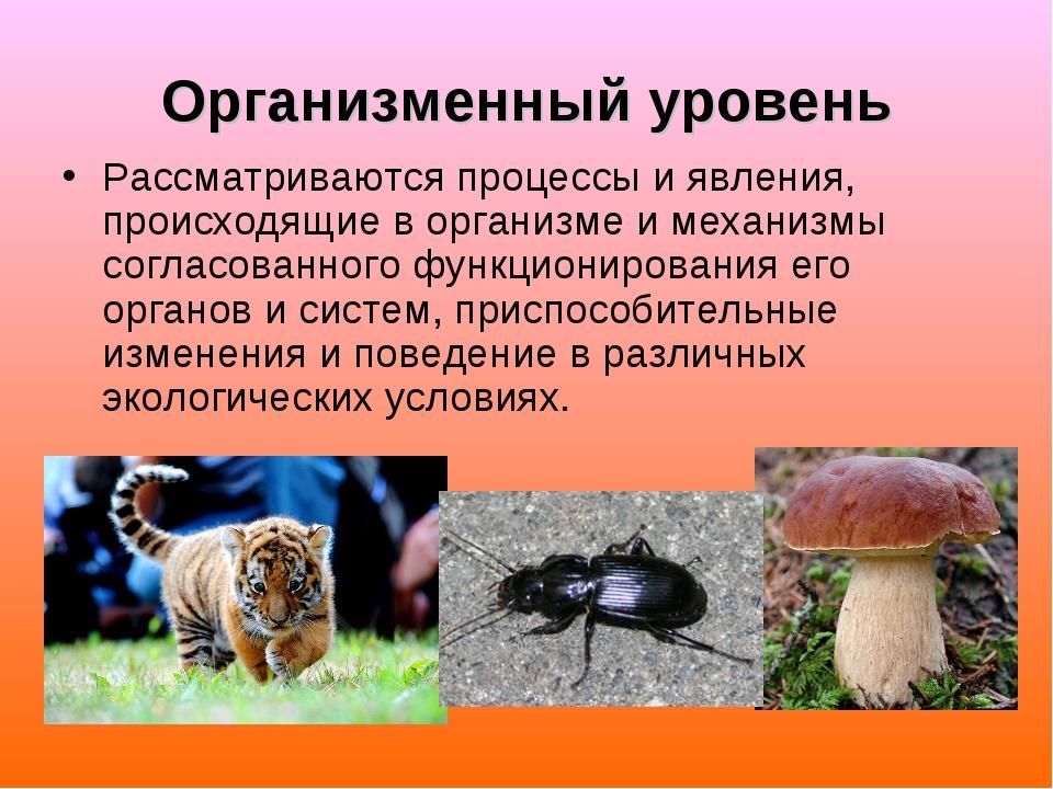Организменный уровень Рассматриваются процессы и явления, происходящие в орга...