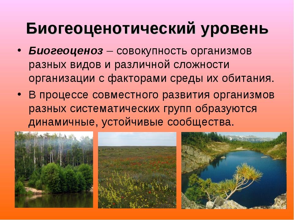 Биогеоценотический уровень Биогеоценоз – совокупность организмов разных видов...