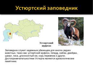 Заповедник служит надежным убежищем для многих редких животных, таких как: ус