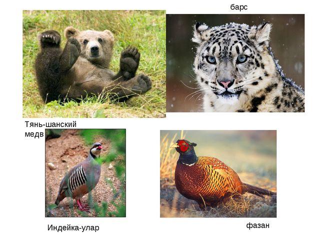 Тянь-шанский медведь барс Индейка-улар фазан