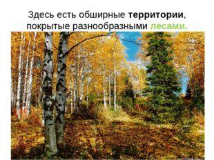 Здесь есть обширные территории, покрытые разнообразными лесами.