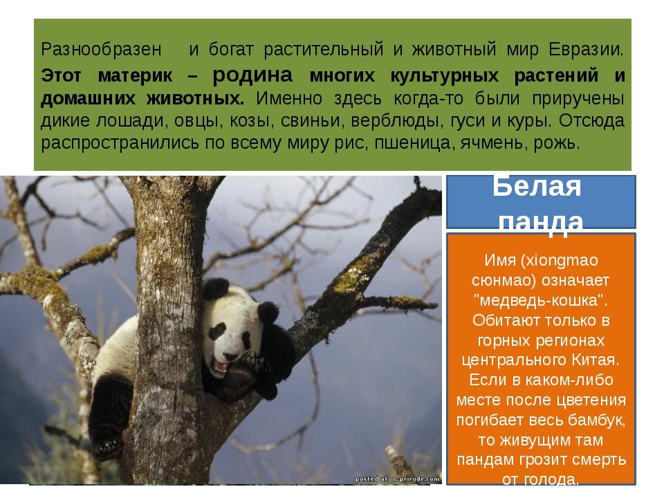 Разнообразен и богат растительный и животный мир Евразии. Этот материк – роди...