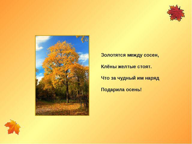 Золотятся между сосен, Клёны желтые стоят. Что за чудный им наряд Подарила ос...
