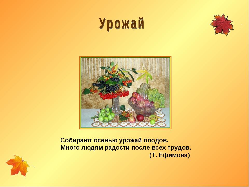 Собирают осенью урожай плодов. Много людям радости после всех трудов. (Т. Ефи...