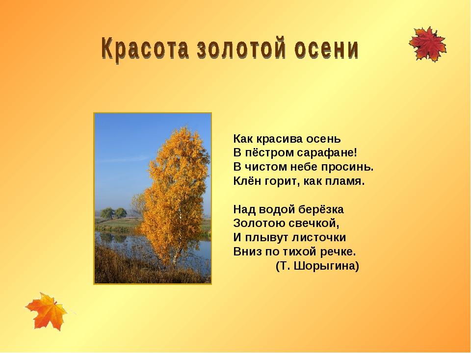 Как красива осень В пёстром сарафане! В чистом небе просинь. Клён горит, как...