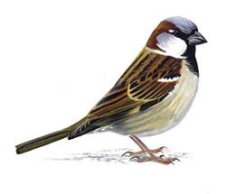 http://www.ebirds.ru/images/first/266.jpg