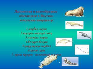 Ластоногие и китообразные обитающие в Якутии» хомулукка киирдилэр: 1.мордьо-