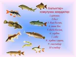 « Балыктар» хомулукка киирдилэр: 1.хатыыс 2.бил 3. быа балык 4. таас бас 5. б