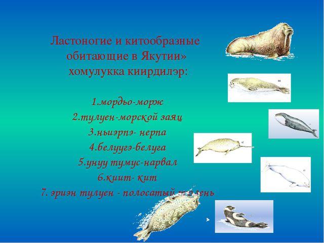 Ластоногие и китообразные обитающие в Якутии» хомулукка киирдилэр: 1.мордьо-...