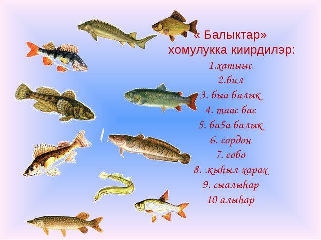 « Балыктар» хомулукка киирдилэр: 1.хатыыс 2.бил 3. быа балык 4. таас бас 5. б...