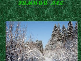 Экскурсии в зимний лес