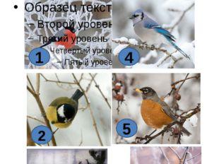 Викторина Задание1.Птицы леса зимой. Назовите птиц нашего леса. 1 2 3 4 5 6