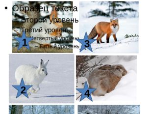 Задание 2. Назовите животных нашего леса. 1 2 4 3 5 6