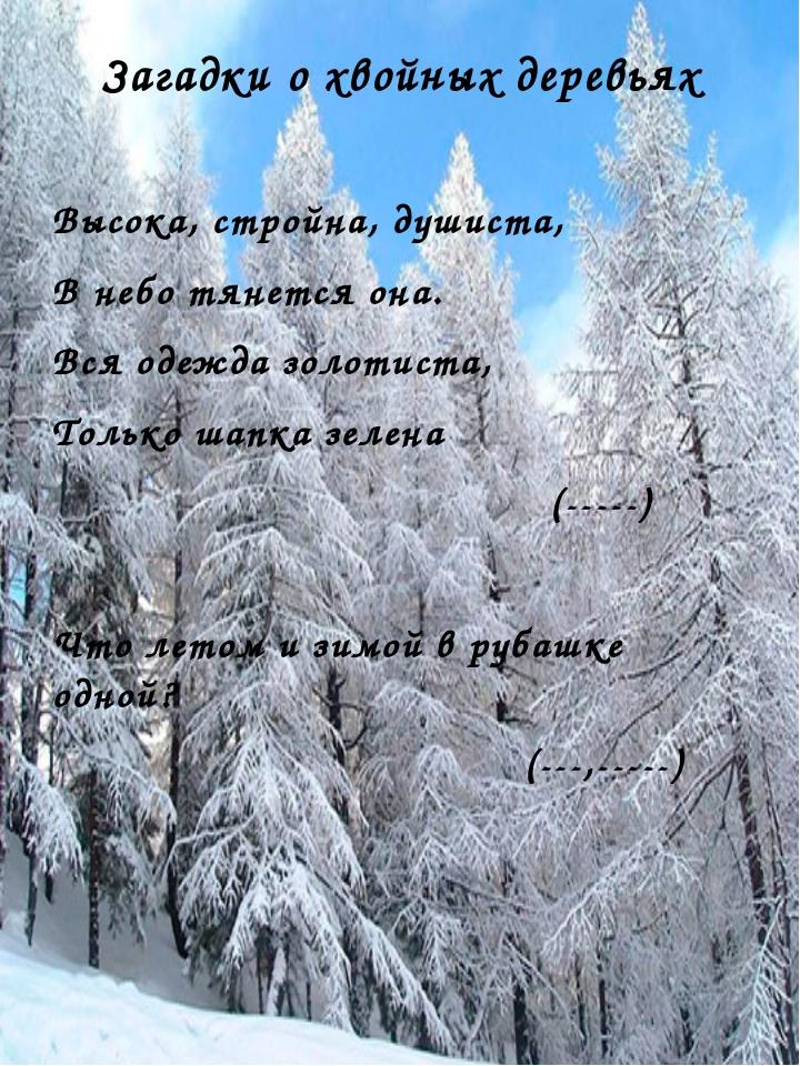 Загадки о хвойных деревьях Высока, стройна, душиста, В небо тянется она. Вся...