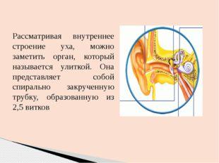 Рассматривая внутреннее строение уха, можно заметить орган, который называетс