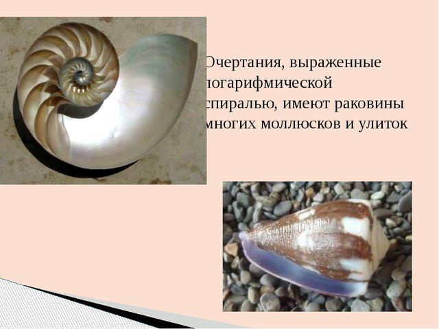 Очертания, выраженные логарифмической спиралью, имеют раковины многих моллюск...