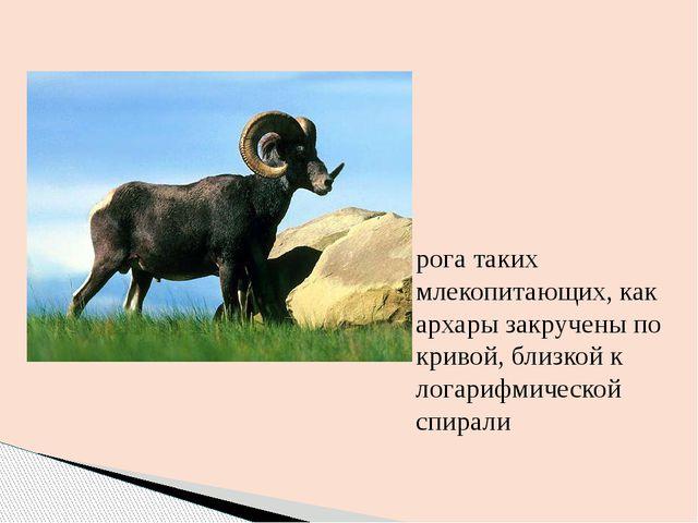рога таких млекопитающих, как архары закручены по кривой, близкой к логарифми...