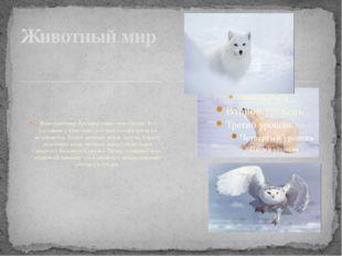 Животный мир Арктики очень своеобразен. Его составляют животные, которые бол