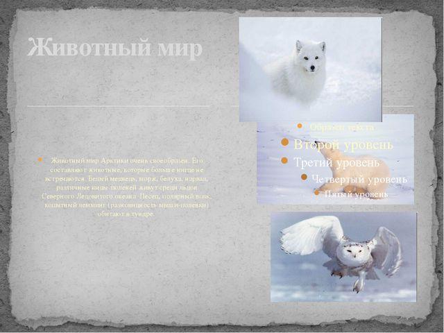 Животный мир Арктики очень своеобразен. Его составляют животные, которые бол...