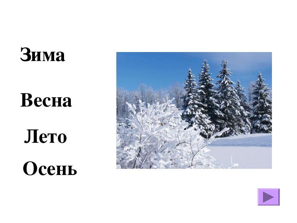 Зима Осень Весна Лето