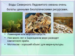 Воды Северного Ледовитого океана очень богаты ценными биологическими ресурсам