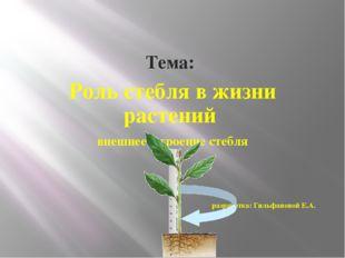Тема: Роль стебля в жизни растений внешнее строение стебля разработка: Гильф