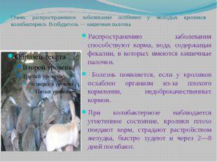 Очень распространенное заболевание особенно у молодых кроликов колибактериоз.