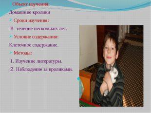 Объект изучения: Домашние кролики Сроки изучения: Втечение нескольких ле