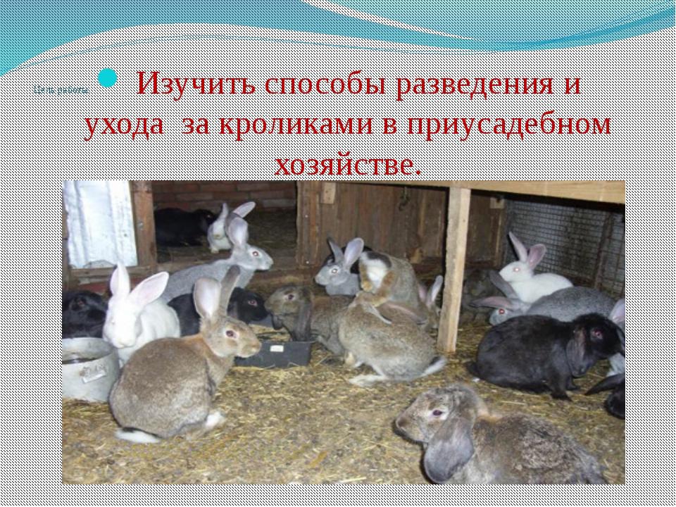 Разведение кроликов в домашних условиях калифорнийской породы