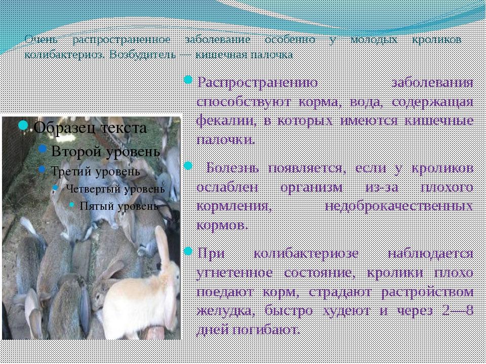 Очень распространенное заболевание особенно у молодых кроликов колибактериоз....